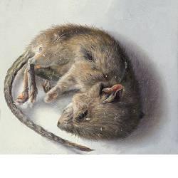Veldmuisje | schilderij van een muis in olieverf van Adriana van Zoest | Exclusieve kunst online te koop in de webshop van Galerie Wildevuur