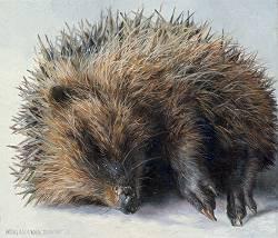Jong egeltje | stilleven schilderij in olieverf van Adriana van Zoest | Exclusieve kunst online te koop bij Galerie Wildevuur
