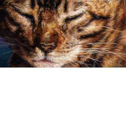 Poepie | dieren schilderij in olieverf van Adriana van Zoest koopt u nu online! ✓Hoogste kwaliteit ✓Veilig betalen ✓Gratis verzending