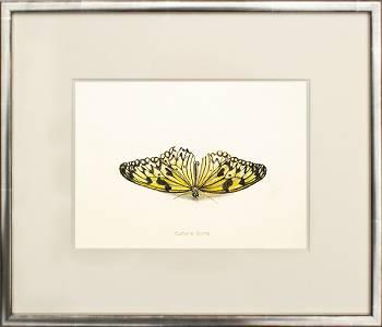 Vlinder III | stilleven schilderij in aquarel van Chris Herenius | Exclusieve kunst online te koop in de webshop van Galerie Wildevuur