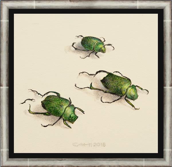 Drei Käfer