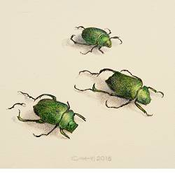 Three beetles | still-life painting in acrylic by Chris Herenius | Exclusive Dutch Master Art | View and buy the best artworks online now