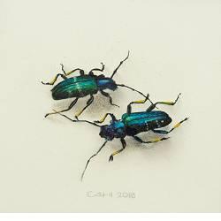 Twee kevers | stilleven schilderij in acrylverf van Chris Herenius | Exclusieve kunst online te koop in de webshop van Galerie Wildevuur