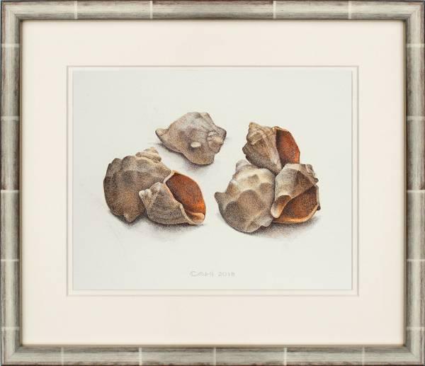 Compositie met schelpen