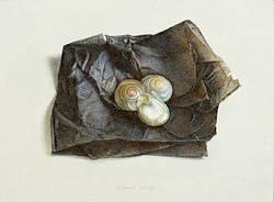 Drie schelpen op verkleurd papier | stilleven schilderij in aquarel van Chris Herenius | Exclusieve kunst online te koop bij Galerie Wildevuur