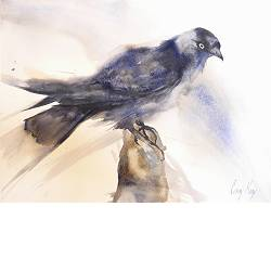 Jackdaw | animal painting in watercolor by Corry Kooy now for sale online! ✓Highest quality & service ✓Safe payment ✓Free shipping