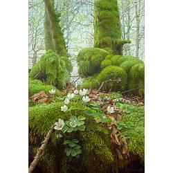 Witte Klaverzuring in het Mossenbos | schilderij van een landschap in olieverf van Joke Frima | Exclusieve kunst online te koop bij Galerie Wildevuur