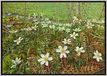 Bosanemonen | schilderij van een landschap in olieverf van Joke Frima | Exclusieve kunst online te koop in de webshop van Galerie Wildevuur