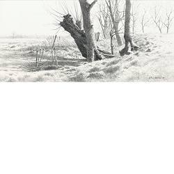 Helwerdse bomen | landschap tekening in potlood van Peter Durieux koopt u nu online!Hoogste kwaliteitVeilig betalenGratis verzending