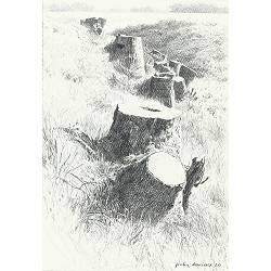Stronken | landschap tekening in potlood van Peter Durieux koopt u nu online!Hoogste kwaliteit & serviceVeilig betalenGratis verzending