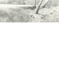 In de namiddag | landschap tekening in potlood van Peter Durieux koopt u nu online!Hoogste kwaliteit & serviceVeilig betalenGratis verzending