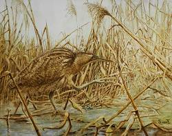 Bittern and reed country 1 | landscape painting in tempera by Sara van Epenhuysen now for sale online! ✓Highest quality ✓Safe payment ✓Free shipping
