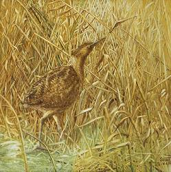 Bittern and reed country 2 | landscape painting in tempera by Sara van Epenhuysen now for sale online! ✓Highest quality ✓Safe payment ✓Free shipping