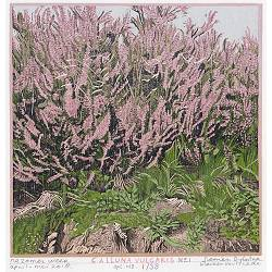 Calluna Vulgaris no 1 | colour woodcut by Siemen Dijkstra | Exclusive Dutch Master Art | View and buy the best artworks online now
