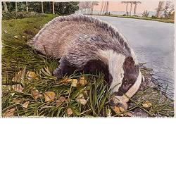 Badger (Meles meles) | landscape in watercolor by Siemen Dijkstra now for sale online!Highest quality & serviceSafe paymentFree shipping