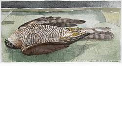 Accipiter Nisus | landscape in watercolor by Siemen Dijkstra now for sale online! ✓Highest quality & service ✓Safe payment ✓Free shipping