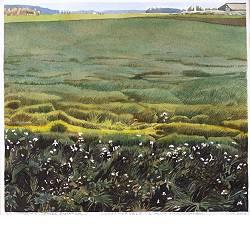 Odoornerveld | landschap in aquarel van Siemen Dijkstra koopt u nu online!Hoogste kwaliteit & serviceVeilig betalenGratis verzending