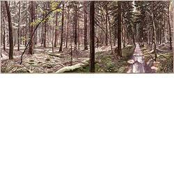 Diever-Veld | landschap in aquarel van Siemen Dijkstra koopt u nu online!Hoogste kwaliteit & serviceVeilig betalenGratis verzending