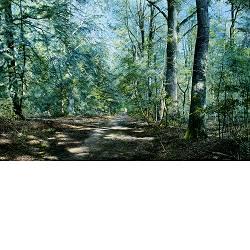 Zoete Zomer | landschap schilderij van Wout Wachtmeester koopt u nu online!Hoogste kwaliteit & serviceVeilig betalenGratis verzending